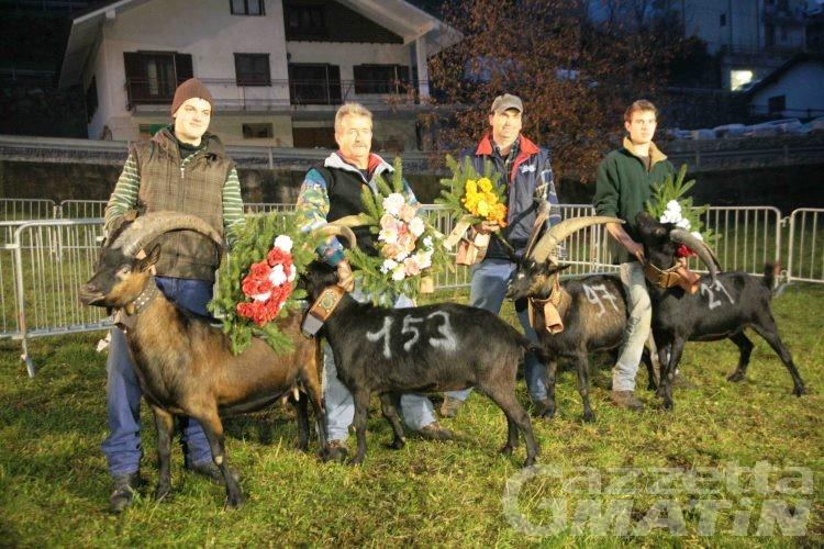 Batailles des chèvres: sabato la finalissima