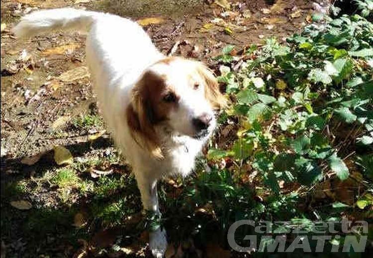Stufa difettosa, dottoressa salvata da cane in attesa di adozione