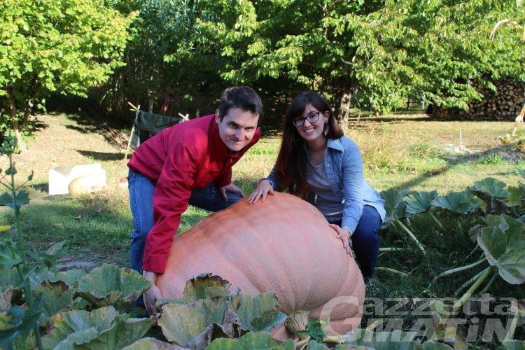 Zucca gigante a Saint-Vincent, da record