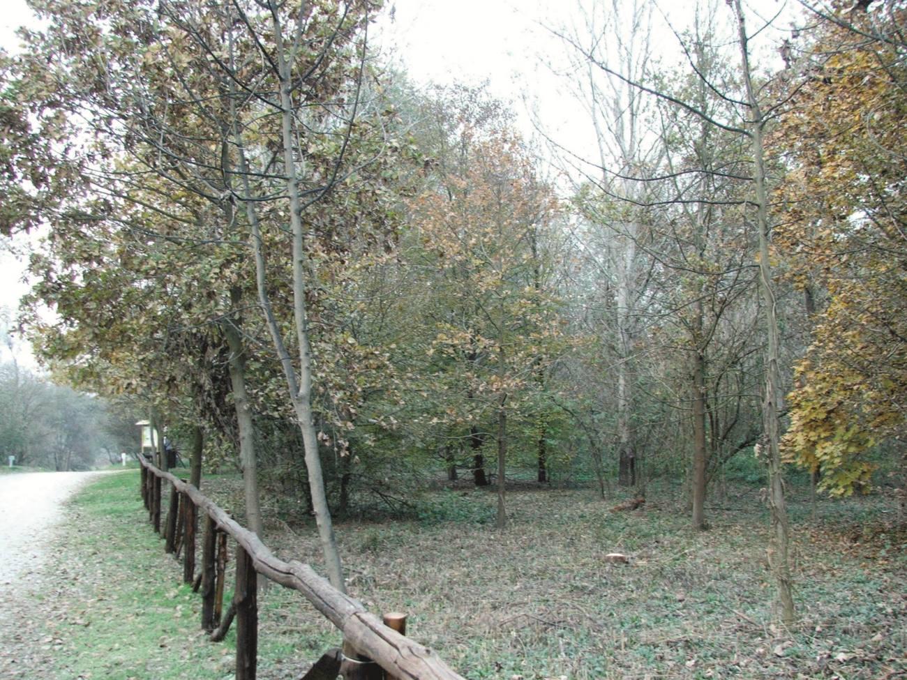 CARMAGNOLA – Nasce il bosco urbano vicino via Torino