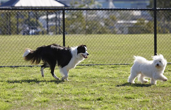 VINOVO – Cercano di rubargli il cane mentre passeggia
