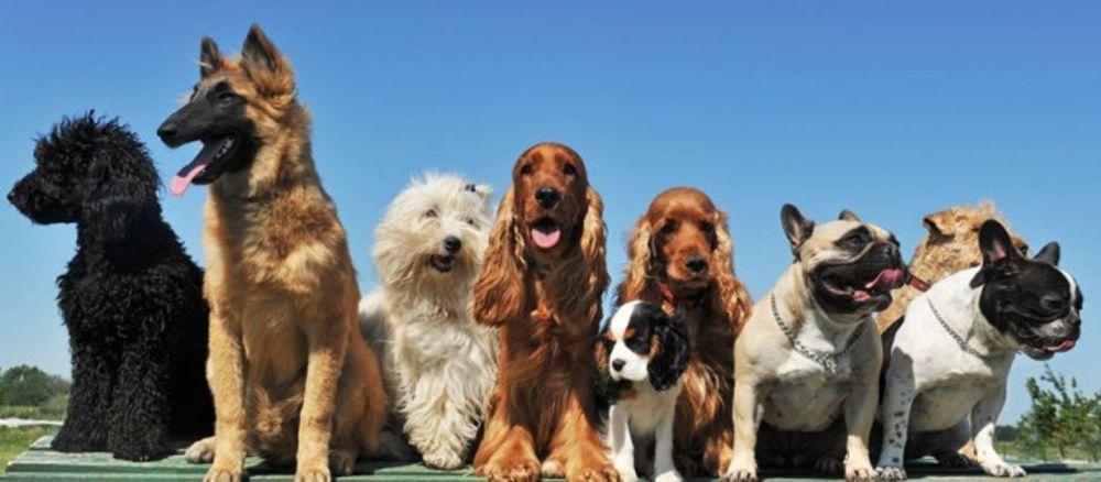 CARMAGNOLA – Festa dei cani al parco della Vigna