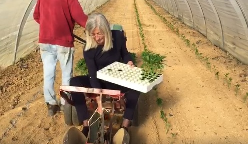 CARMAGNOLA – Anche il sindaco pianta peperoni in attesa della fiera