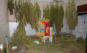 Torre Annunziata. Rione Carceri, sequestrati 160 chili di marijuana e armi
