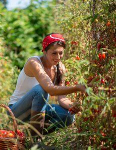 Castellammare: nell'orto di Marianna dove spuntano i Dama, produzione di eccellenza da tre generazioni